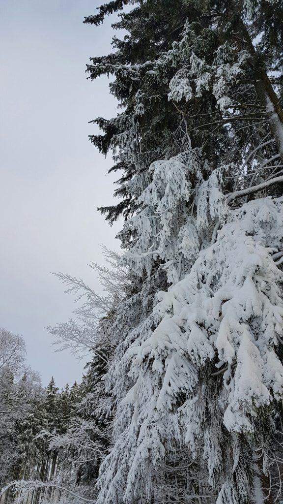 Winterspaß im Harz