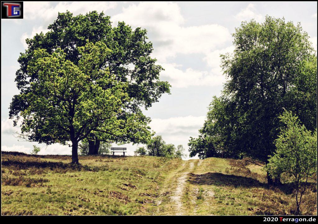 Weseler Heide by Terragon.de