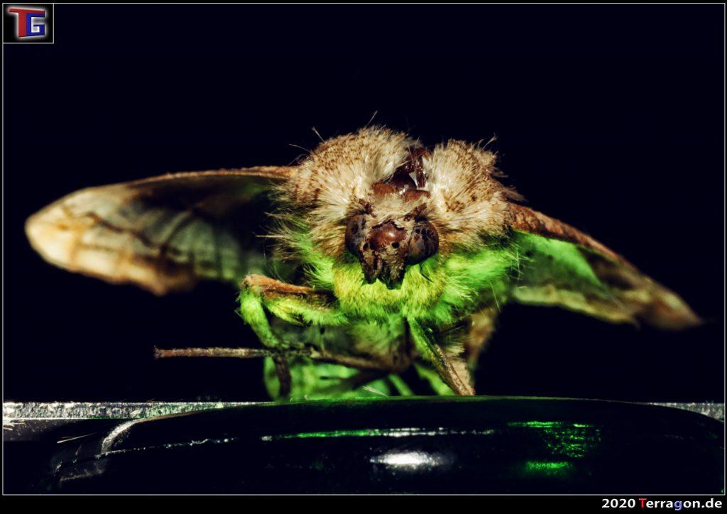 Horror im Wohnzimmer: Immer mehr Menschen finden dieses Tier auf der Fensterbank!