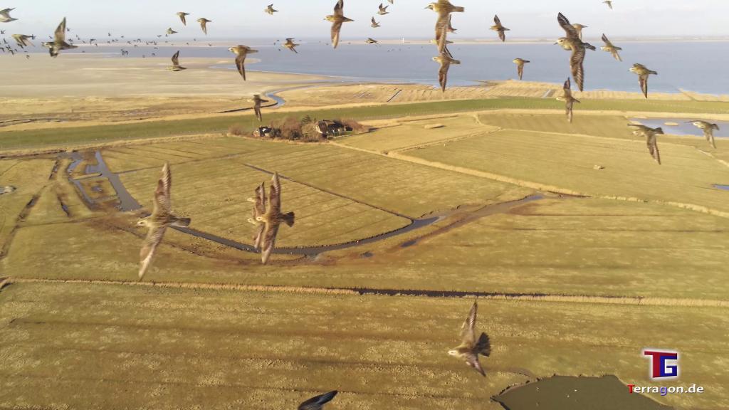Tanz mit den Vögeln