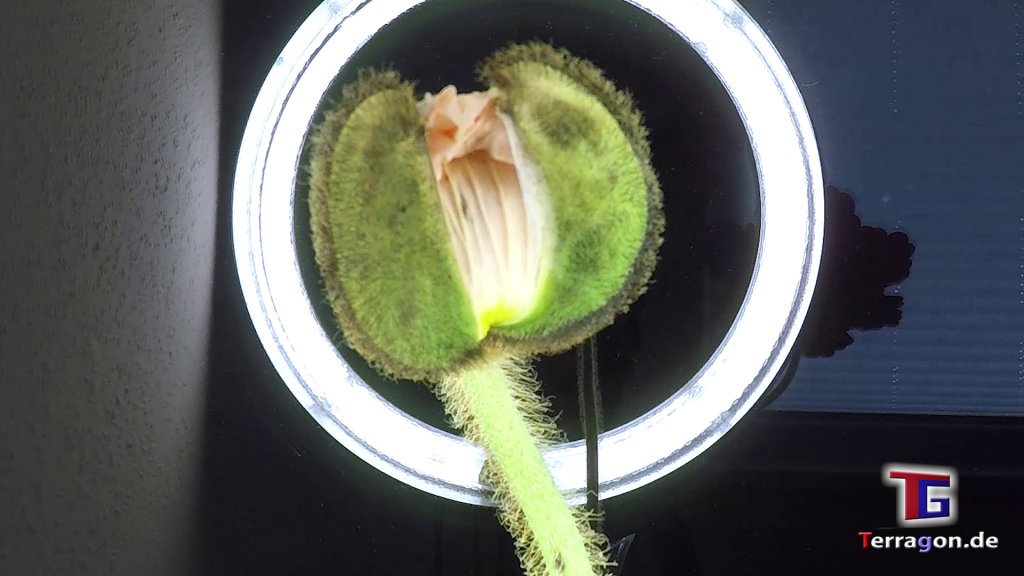 Studie beweist: Das passiert mit Blumen in Quarantäne!