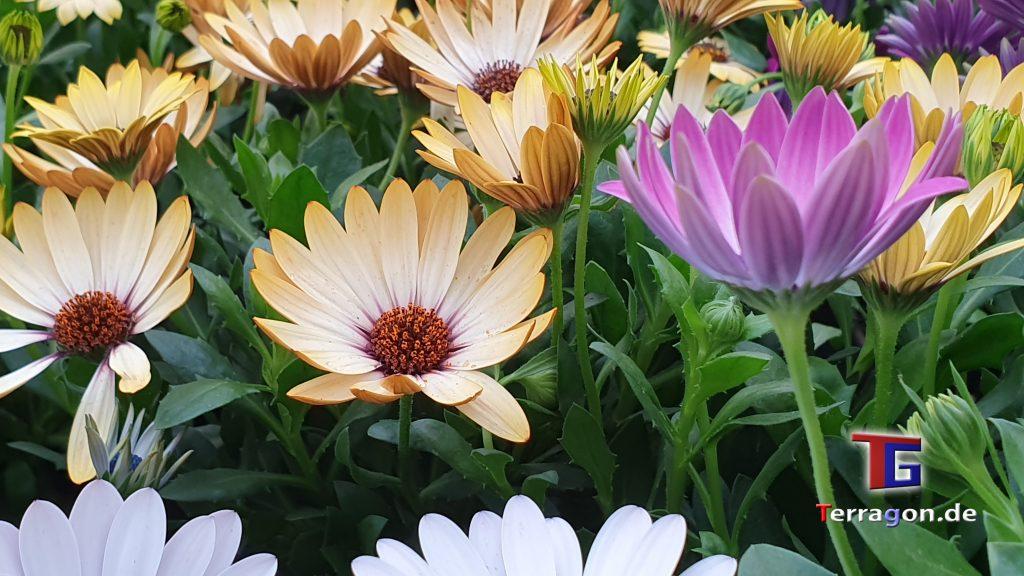 Echte Blumenwiese oder Baumarkt: Erkennst Du den Unterschied?