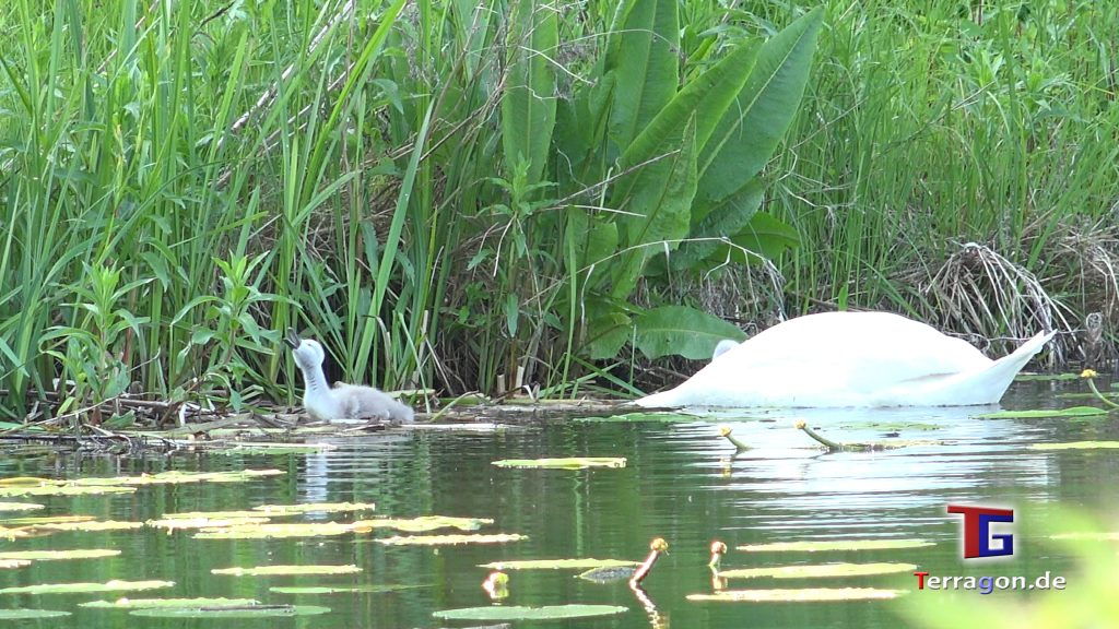 Die Wildnis vor der Tür: Wildlife Animals im Georgengarten Hannover