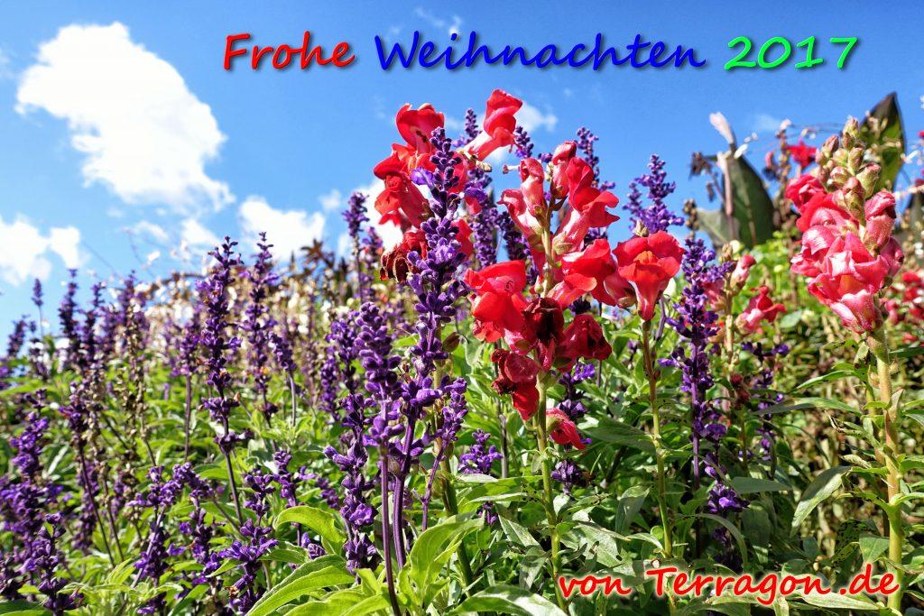 Abstrakte Blumen: Eine Frage der Perspektive im Georgengarten Hannover
