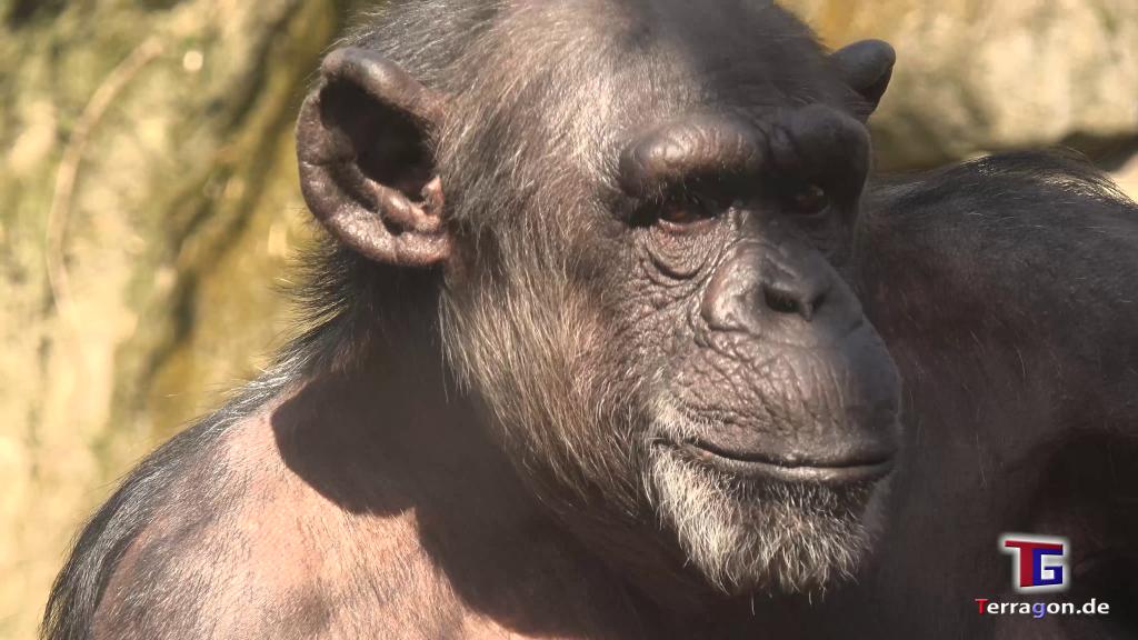 Affe, Löwe, Giraffe: Ein Tag im Zoo Hannover